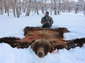 Russia Bear